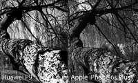 Huawei P9 vs. iPhone 6s: Schwarzweiß-Aufnahme