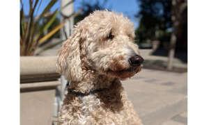 Google Pixel 2 Beispielfoto Hund