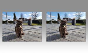 Smartphone-Dual-Kamera: Bokeh