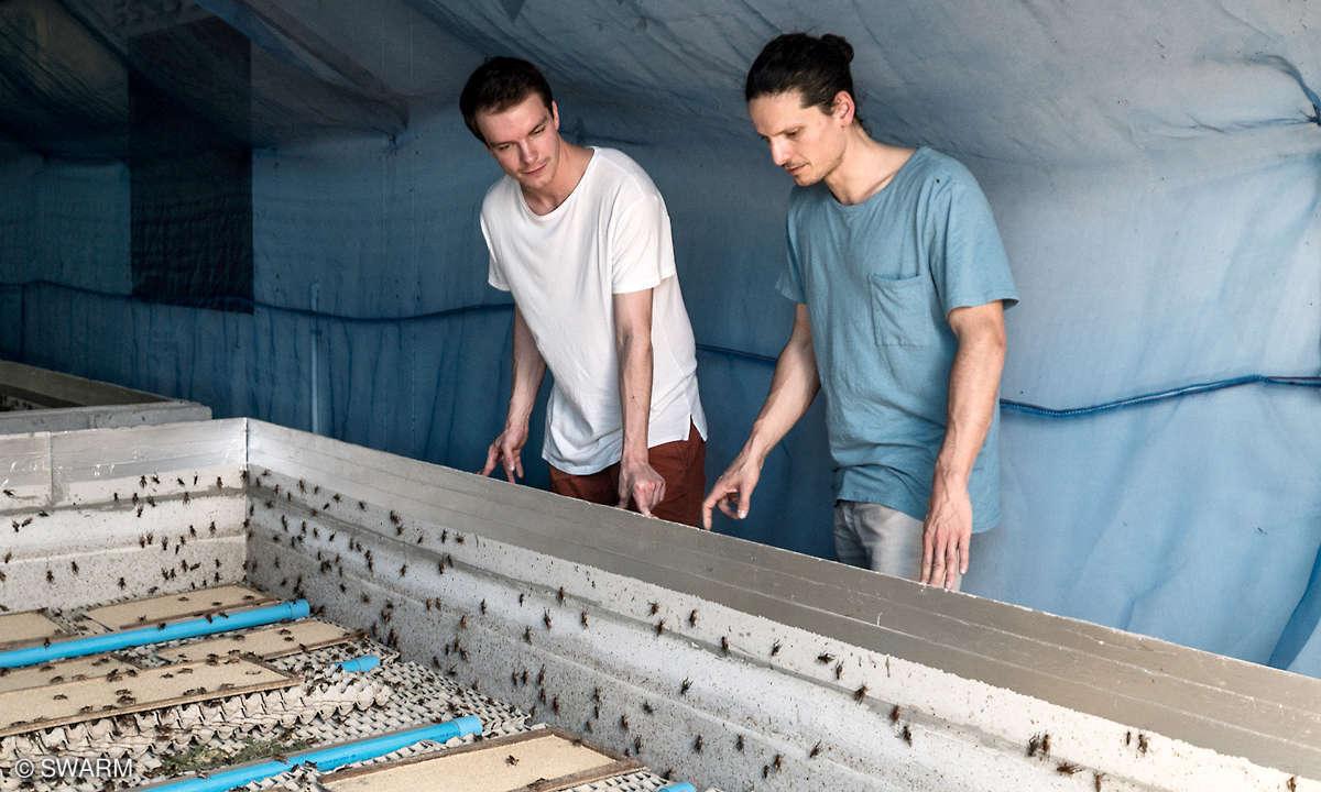 Swarm Team Insect Farm