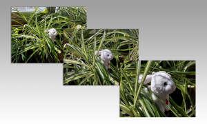 Honor 9X Pro Triple-Kamera Foto-Beispiel