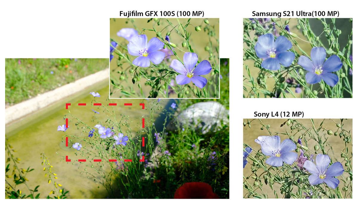 S21 Ultra vs. GFX 100s im 100-MP-Vergleich Blumen