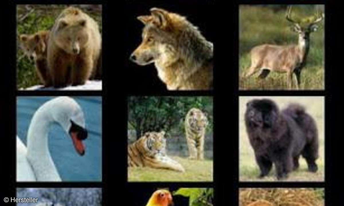 Animal Puzzle für Kids