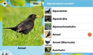 iPhone-App Zwitschern!