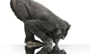 Corning Gorilla Glas