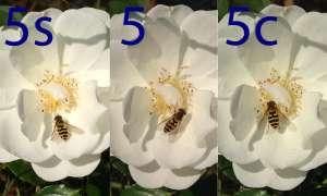Foto, Kamera, iPhone 5cs, 5c, 5